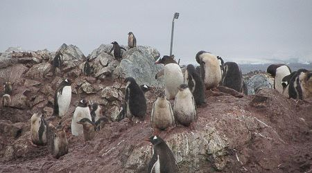 Antarctica Visitor Site- Georges Point, Rongé Island
