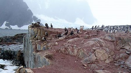 Antarctica Visitor Site- Petermann Island