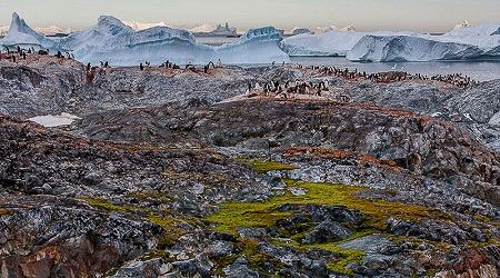 Antarctica Visitor Site- Yalour Islands