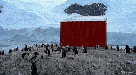Antarctica Visitor Site- Neko Harbor