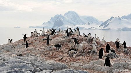 Antarctica Visitor Site- Orne Islands