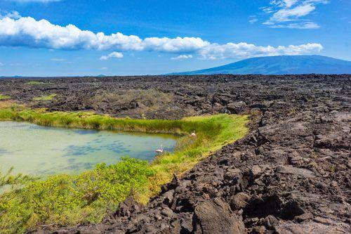Salt Mine Volcano