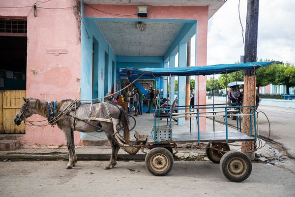 Camaguey horse driving