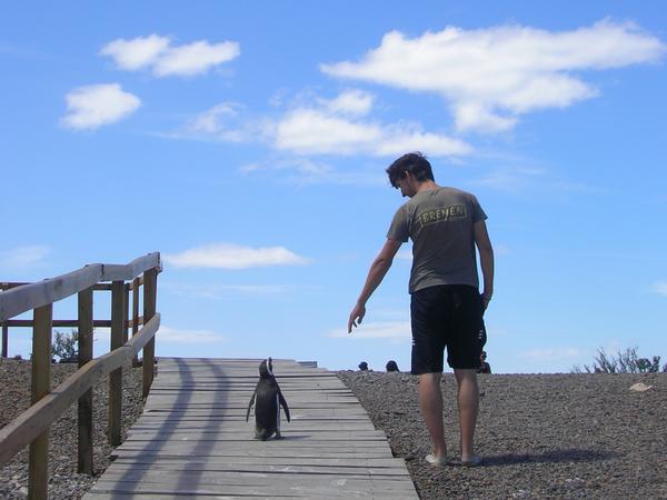 pinguins4:3