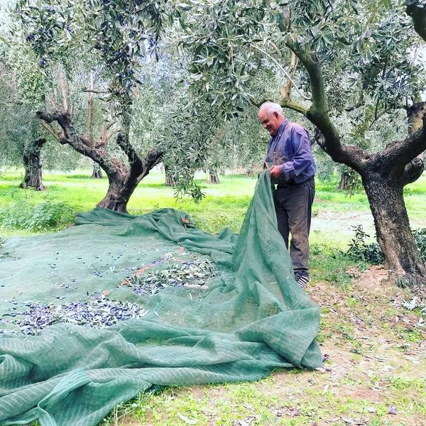 olive routes