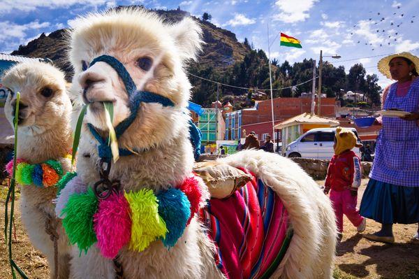 huanaco Bolivia