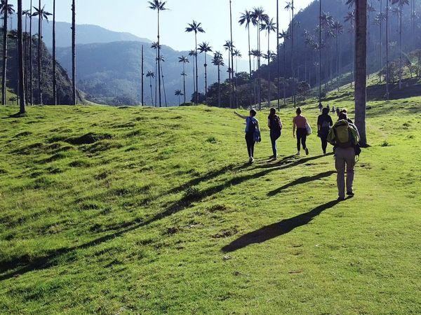 Valle del Cocora group trip
