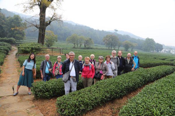 Hnagzhou Tea Field