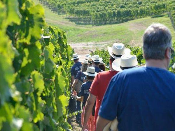 xnts Vergina winery Wineyards people Hat