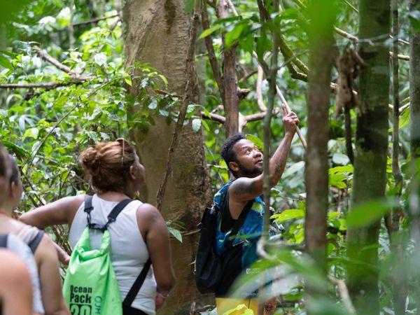 Khao Sok National Park Jungle Trekking
