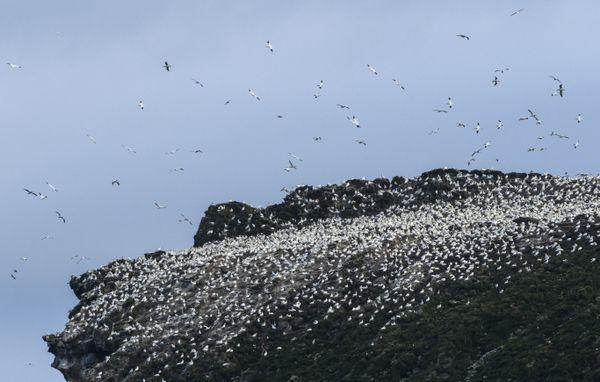 Albatros Expedition jewels of north atlantic