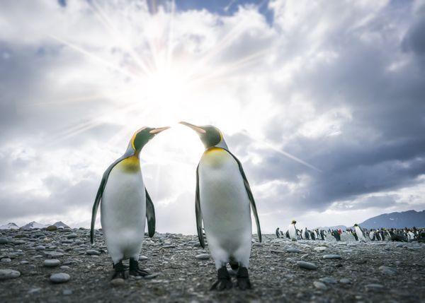 Oceanwide Expeditions Falklands, South Georgia, Antarctica