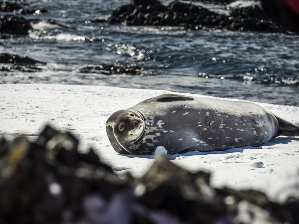 Oceanwide Expeditions Antarctica Basecamp