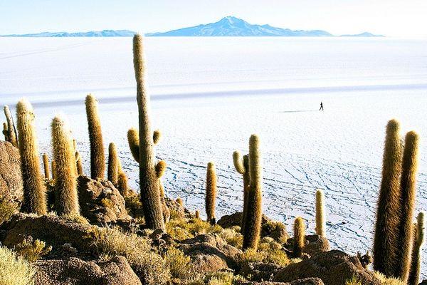Salar de uyuni inkahuasi island