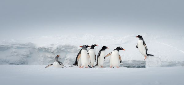 Antarctica21 wildlife