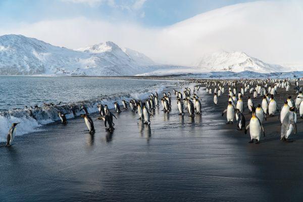 Silversea Antarctica Photos