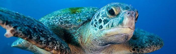 Filter media for: A selection of the best mid-range Galapagos cruises page