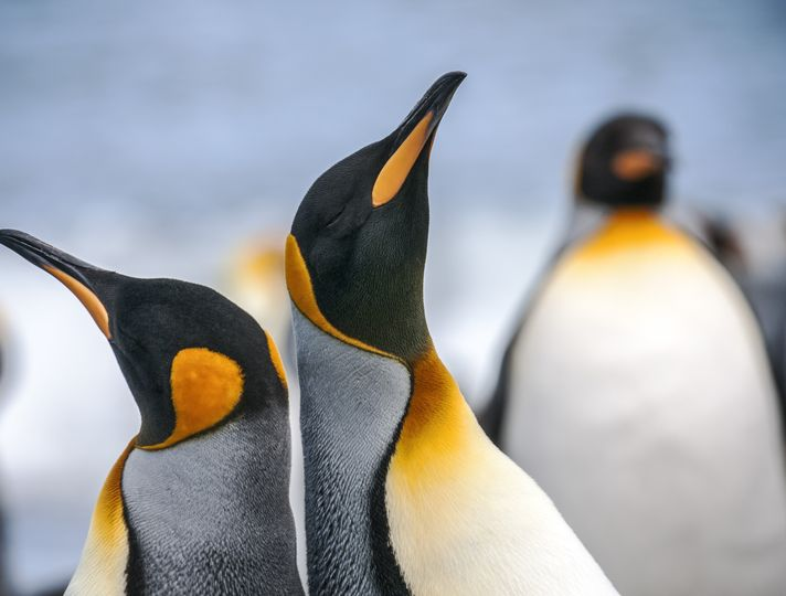 Planning a cruise to the Antarctica or Arctic?